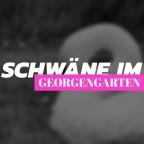 Schwäne im Georgengarten in Hannover