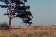 Ein Baum in Pelzerhaken